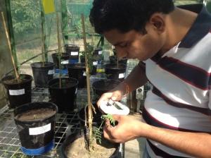 Apogee Chlorophyll Meter