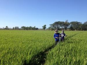 Soil Moisture Rice1